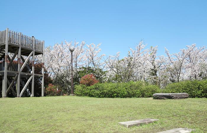 淡路島 曲田山の様子