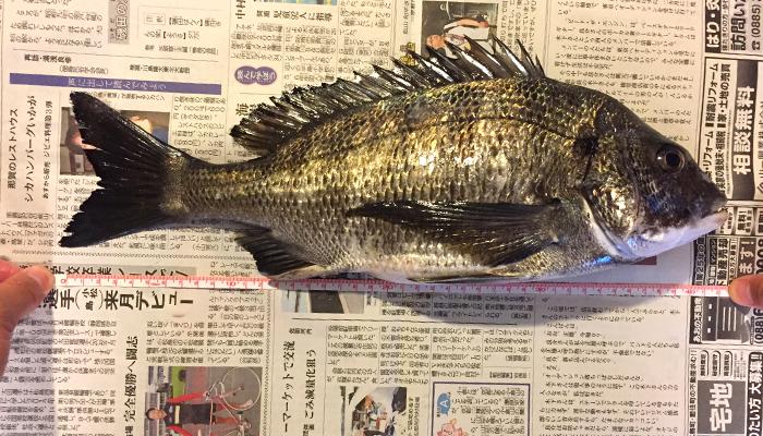 黒鯛40cmオーバー