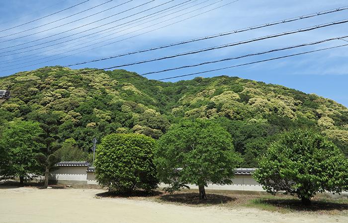 淡路島 薬師庵からの風景