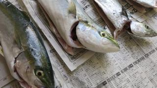 ムコイチの釣果