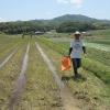 第2回・米作り体験記 種を蒔いて、田んぼに肥料をあげてきた