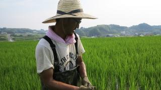 米作り体験の様子