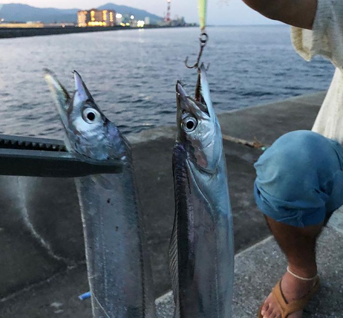 淡路島で釣りタチウオ
