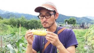 生でトウモロコシを食べる