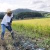 第17回・米作り体験記 収穫直前、緊急水抜き大作戦💦
