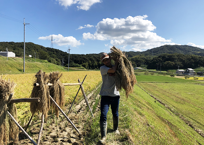 お米作り作業