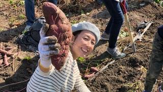 お芋掘り体験