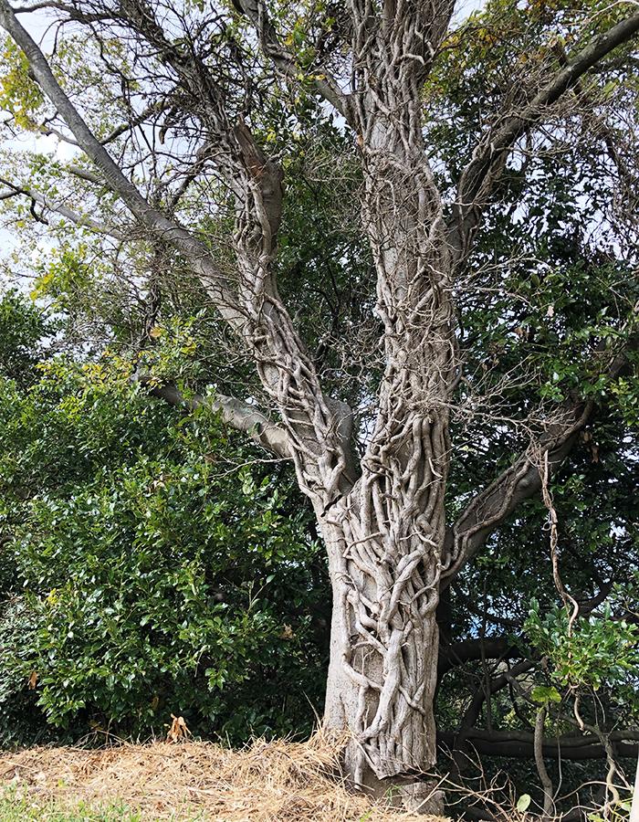 浅野公園の木