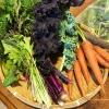 淡路島ファーム「太陽と海」で、無農薬の新鮮野菜ゲット!旬の野菜はやっぱり美味しい