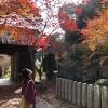淡路島の紅葉は後半戦⁉️ 淡路市長沢の「東山寺」の紅葉観光をしてきました🍁