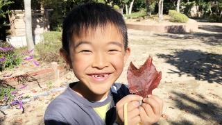 秋の落ち葉拾い