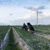 大変でも自然農法にこだわる「大村農園」で、草引きのお手伝いをしてきました😁