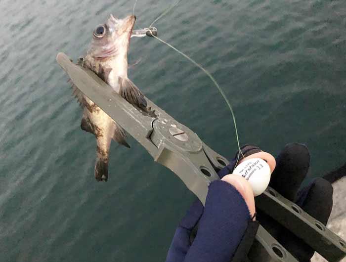 淡路島 釣り