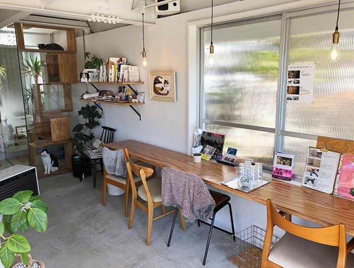 淡路島の猫カフェ toneko 店内の様子