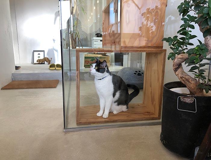 淡路島の猫カフェ toneko 猫