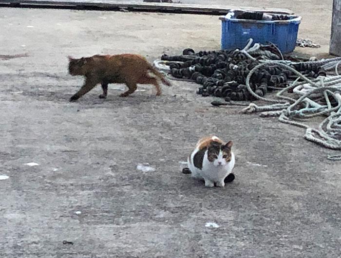 淡路島の漁港の猫