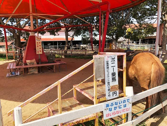 淡路島牧場のポニー乗馬