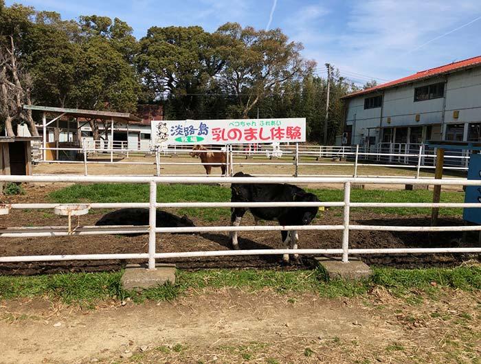 淡路島牧場の牛