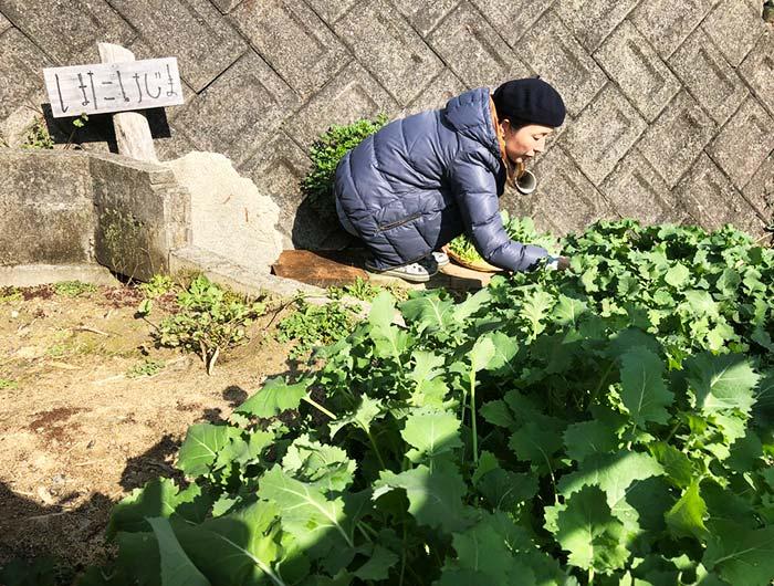 淡路島 家庭菜園 くきたち菜