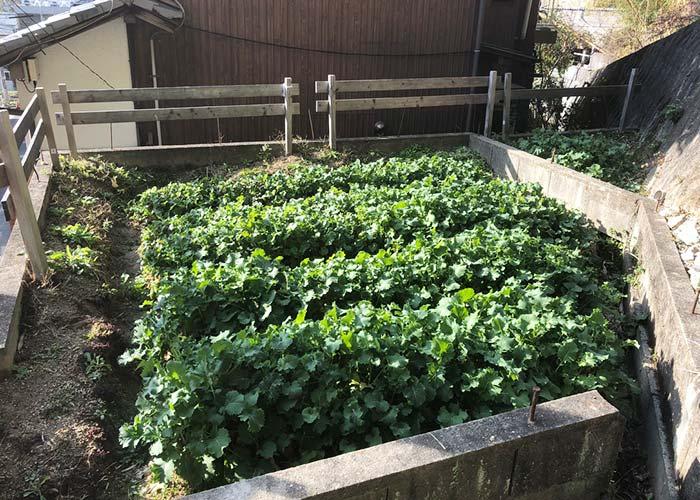 淡路島 家庭菜園