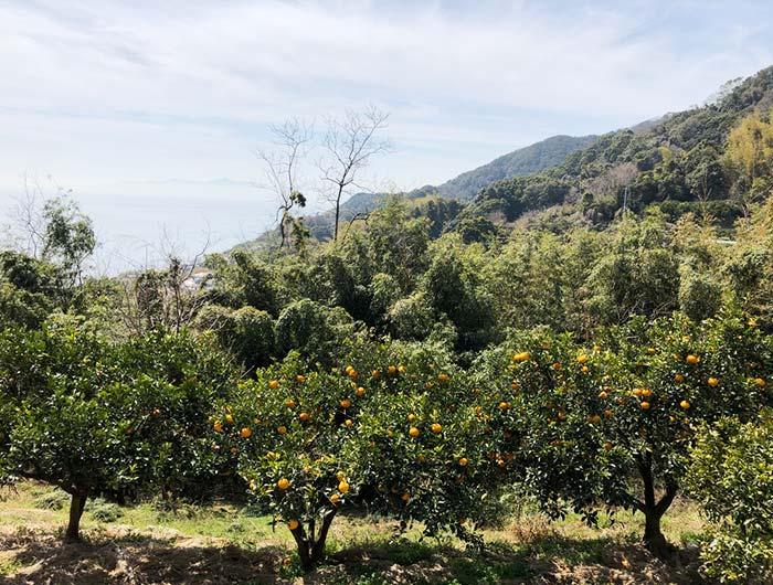 淡路島 御井の清水の水汲みルートで見つけたオレンジ