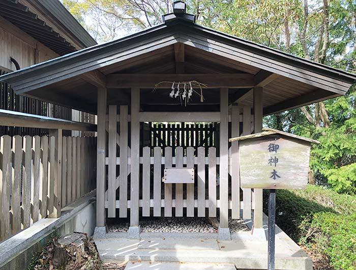 おのころ島神社の御神木