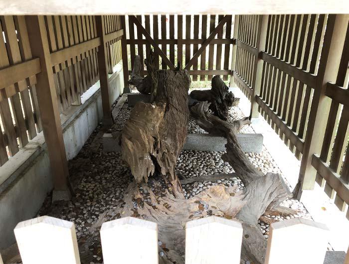 おのころ島神社の御神木 夫婦松