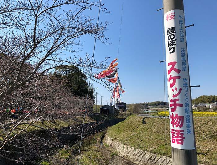 みたから公園の鯉のぼりと桜