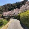 桜に包まれた古刹、淡路島・圓城寺を観光してきました。日本庭園も見所です
