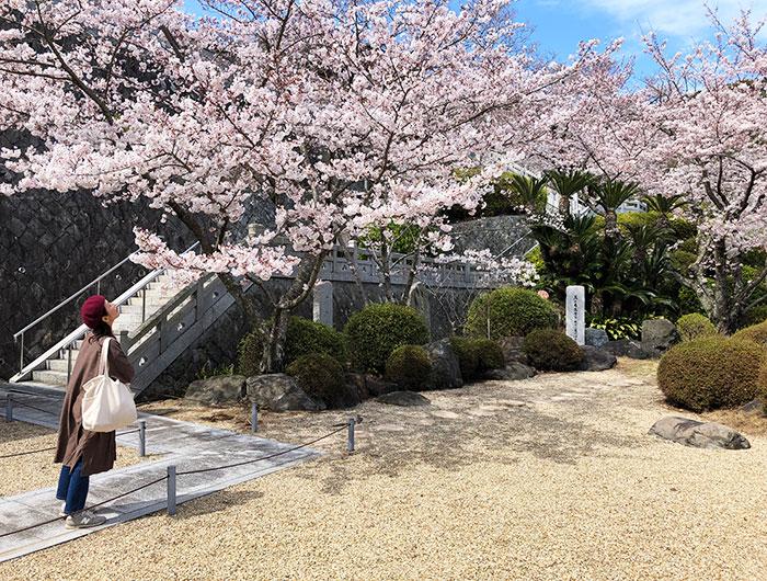 圓城寺の庭園と桜の共演