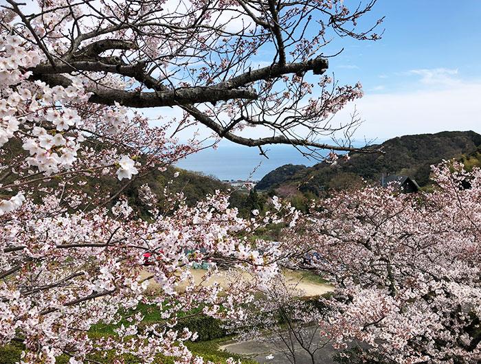圓城寺からの眺め