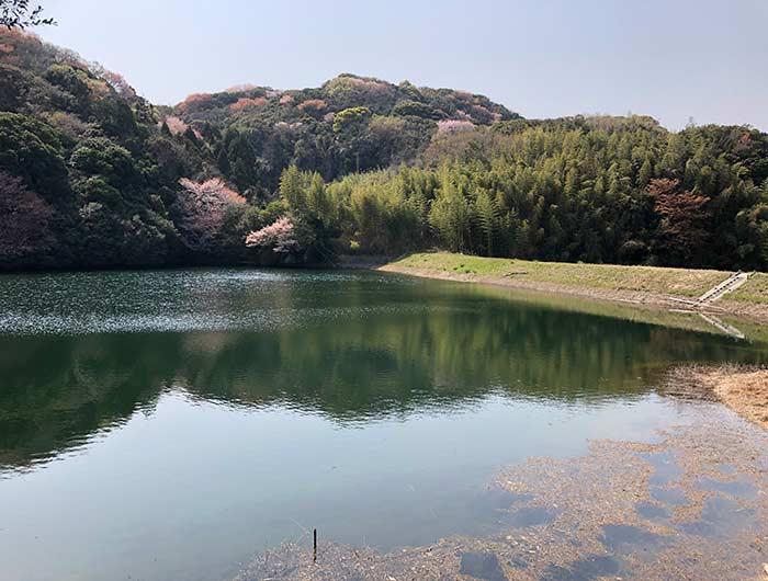 伊勢の森神社の周辺景色