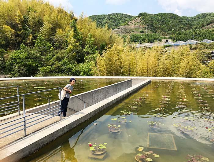 本福寺水御堂 蓮池