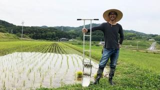 淡路島 米作り