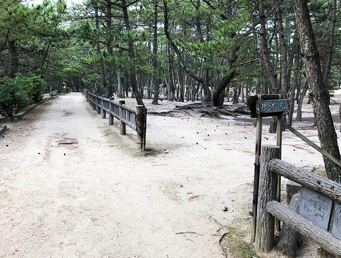 慶野松原・根上がり松までの道のり