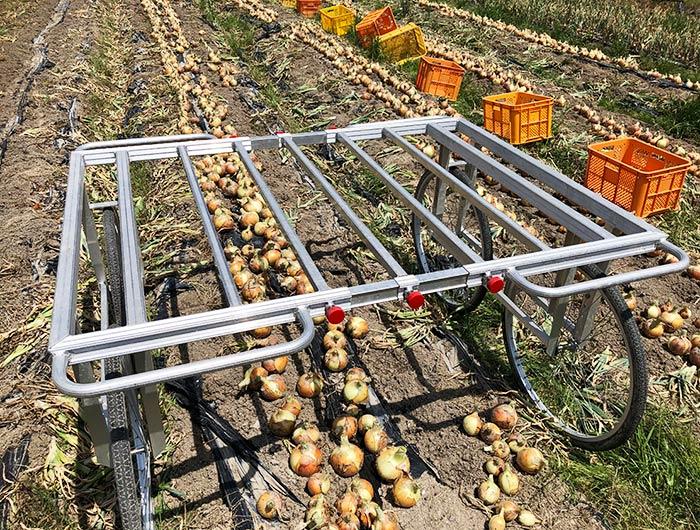 玉ねぎの収穫台