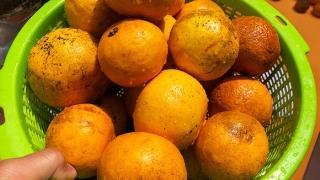 淡路なるとオレンジ