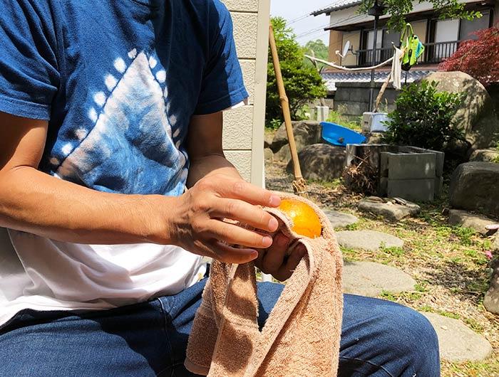 淡路なるとオレンジを磨く