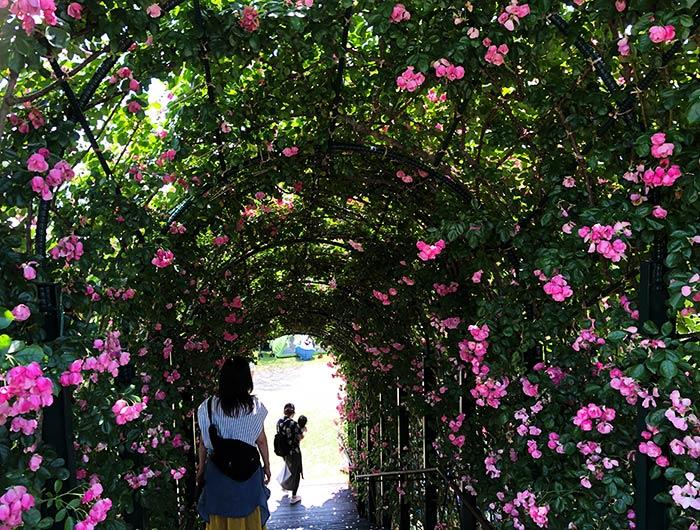 ウェルネスパーク五色 バラのアーチ