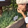 淡路ハーブフェスタ‼️香りの公園でハーブの楽しみ方を知りました〜😁