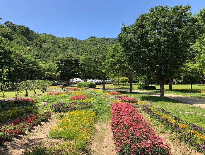 淡路ふれあい公園 花畑