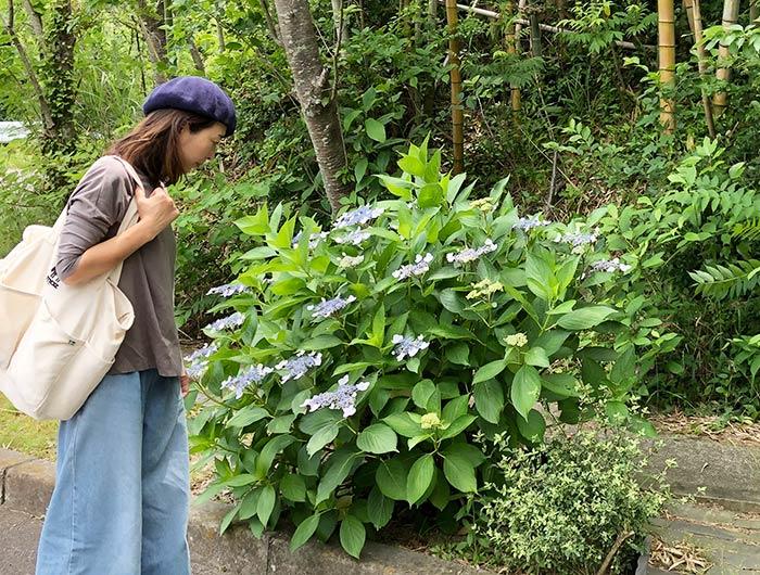 玉青館の紫陽花