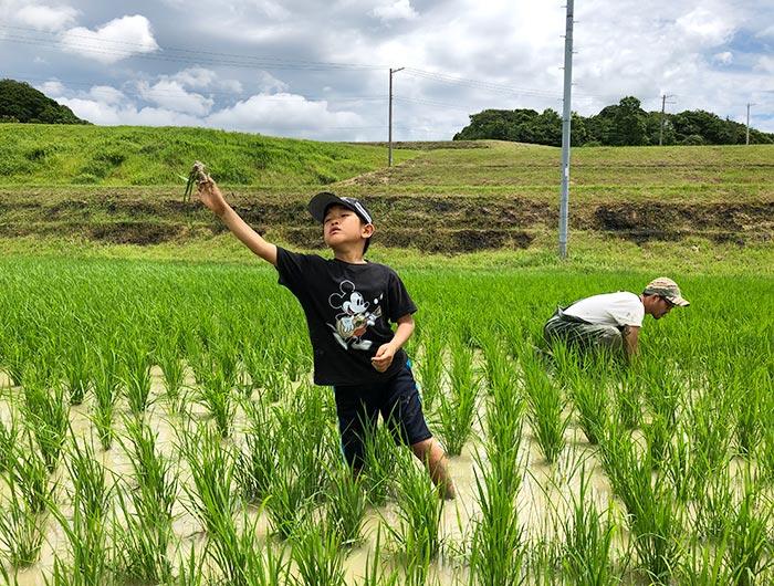 お米づくり