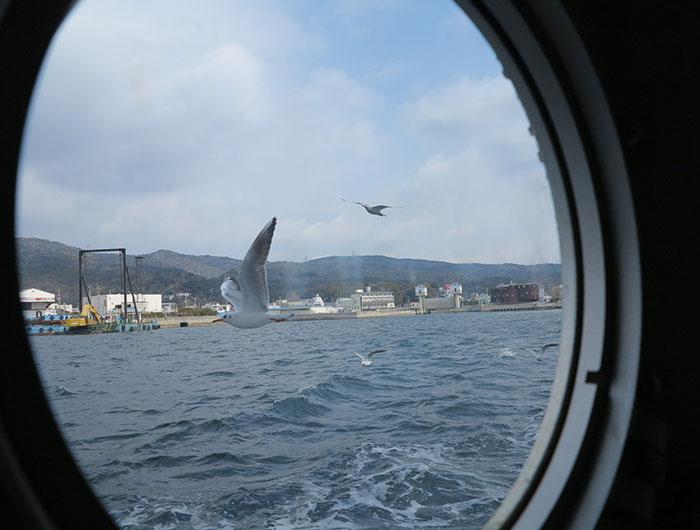 船の中から見るカモメ