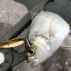 プラバーでメッキ釣り