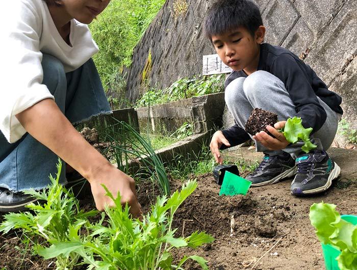 野菜を植える