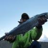 淡路島・洲本周辺で青物狙い。80cmアップのサワラが釣れた〜😁