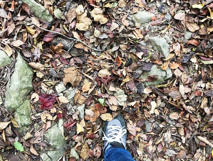 落ち葉と靴