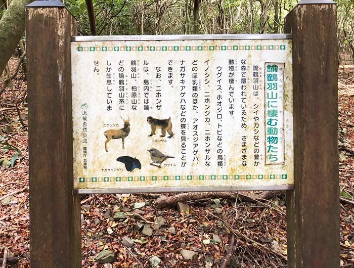 諭鶴羽山に棲む動物たち