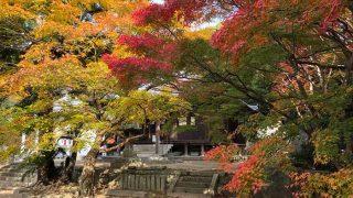 成相寺の紅葉・淡路島